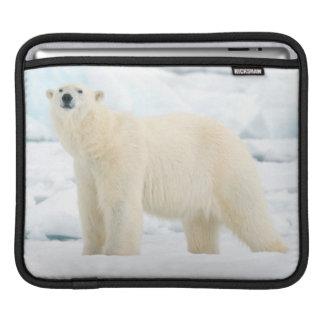Adult polar bear in search of food iPad sleeve