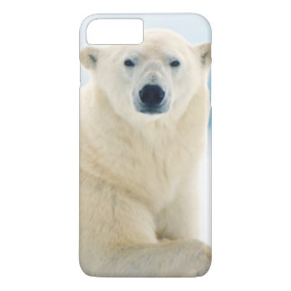Adult polar bear large boar on the summer ice iPhone 8 plus/7 plus case
