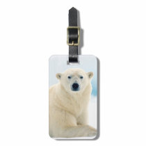 Adult polar bear large boar on the summer ice luggage tag
