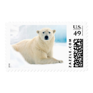 Adult polar bear large boar on the summer ice stamp