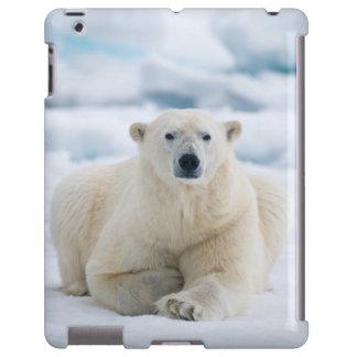 Adult polar bear on the summer pack ice
