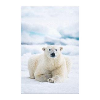 Adult polar bear on the summer pack ice canvas print