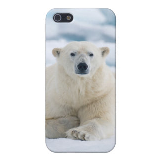 Adult polar bear on the summer pack ice cover for iPhone SE/5/5s
