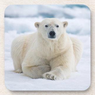 Adult polar bear on the summer pack ice drink coaster