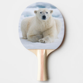 Adult polar bear on the summer pack ice Ping-Pong paddle