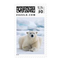 Adult polar bear on the summer pack ice postage