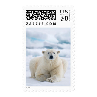 Adult polar bear on the summer pack ice postage