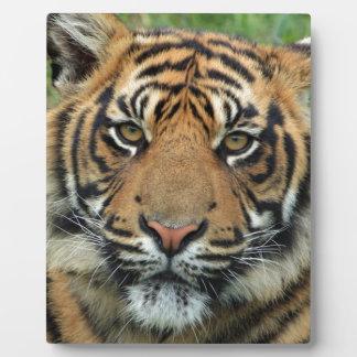 Adult Tiger Plaque