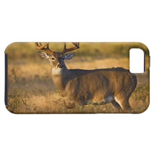 adulto Blanco-atado de los ciervos (virginianus de iPhone 5 Case-Mate Coberturas