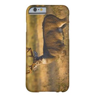 adulto Blanco-atado de los ciervos (virginianus Funda Barely There iPhone 6