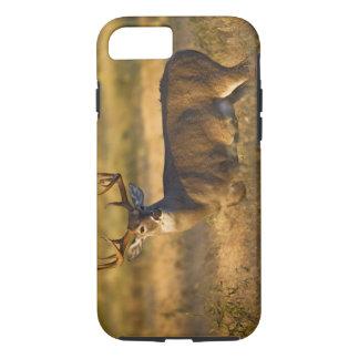 adulto Blanco-atado de los ciervos (virginianus Funda iPhone 7