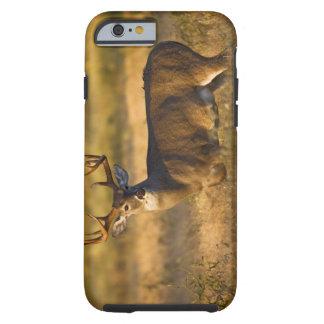 adulto Blanco-atado de los ciervos (virginianus Funda Resistente iPhone 6