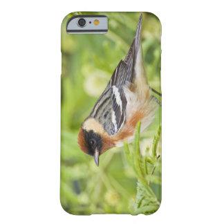 Adulto de la curruca de la Bahía-breasted Funda Para iPhone 6 Barely There
