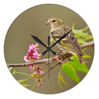 Adulto de Siskin del pino (pinus del Spinus) Reloj Redondo Grande