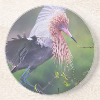 Adulto rojizo del Egret (Egretta Rufescens) Posavaso Para Bebida