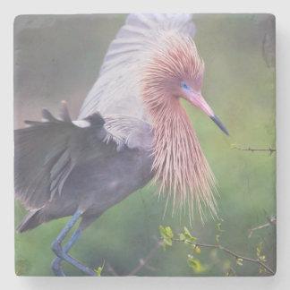 Adulto rojizo del Egret (Egretta Rufescens) Posavasos De Piedra