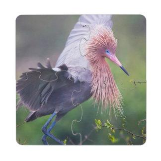 Adulto rojizo del Egret (Egretta Rufescens) Posavasos De Puzzle