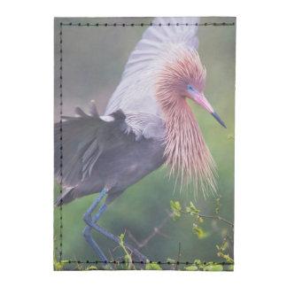 Adulto rojizo del Egret (Egretta Rufescens) Tarjeteros Tyvek®