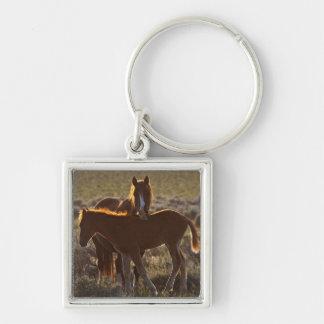 Adulto y potro salvajes del caballus del Equus del Llaveros Personalizados