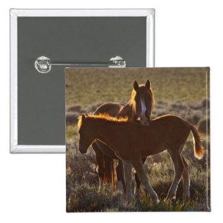 Adulto y potro salvajes del caballus del Equus del Pin Cuadrada 5 Cm