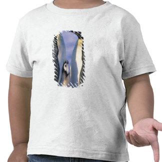 Adultos de los pingüinos de emperador (forsteri camisetas