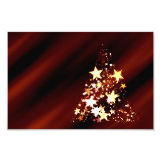 Advent Star Christmas Christmas Tree Poinsettia Art Photo