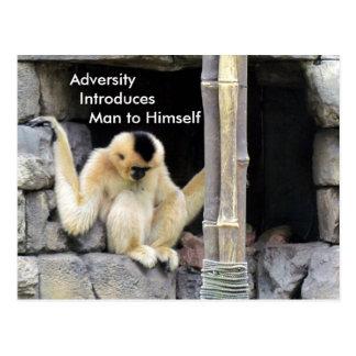 Adversity Quote Postcard (White Cheeked Gibbon)