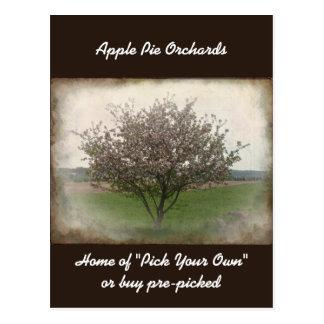 Advertising Apple Tree in Bloom Postcard