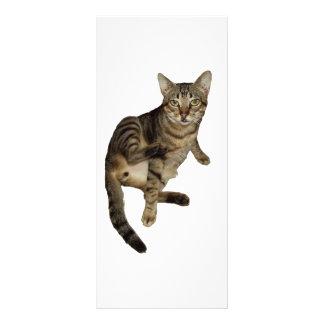 Advertising card Charming Cat