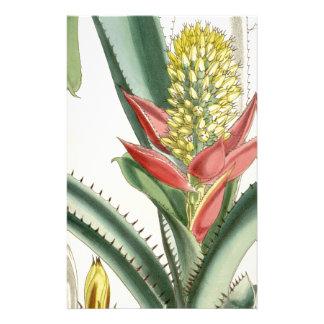 Aechmea mertensii (= mucroniflora) stationery