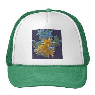 Aeonium floreciente gorros