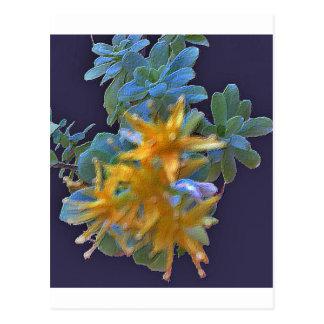 Aeonium floreciente postal