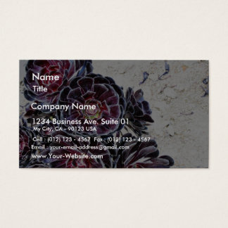 Aeonium Flower On Dry Rocks Business Card