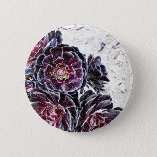 Aeonium Flower On Dry Rocks Button