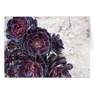 aeonium flower on dry rocks note card