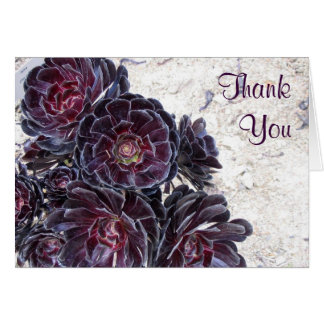aeonium flower on dry rocks thank you note card