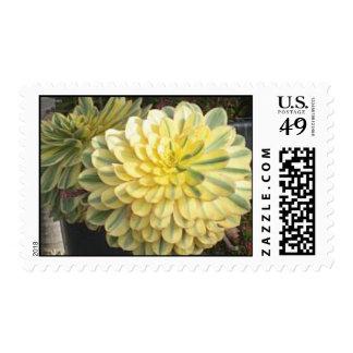 Aeonium Postage Stamps