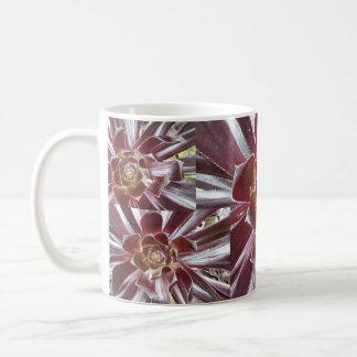 Aeonium Zwartkop succulent mug