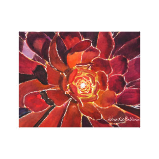 Aeonium 'Zwartkop' Watercolor Canvas Print