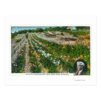 Aerial View of Burbanks Experimental Farm Postcard