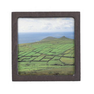aerial view of farmland by the sea gift box