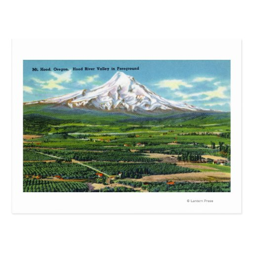 Aerial View of Hood River Valley and Mountain Postcard
