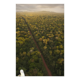 Aerial View of rainforest. Iwokrama Reserve, 2 Photo Print