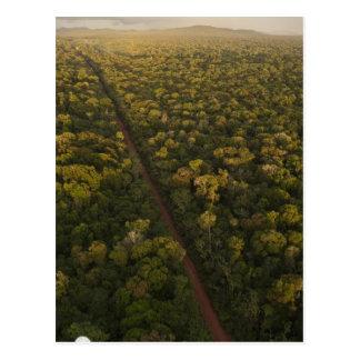 Aerial View of rainforest. Iwokrama Reserve, 2 Postcard