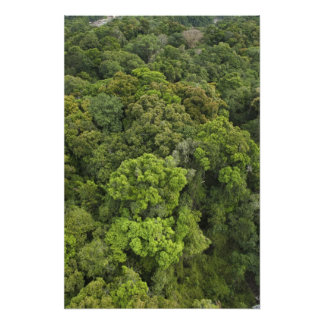 Aerial View of rainforest. Iwokrama Reserve, Photographic Print