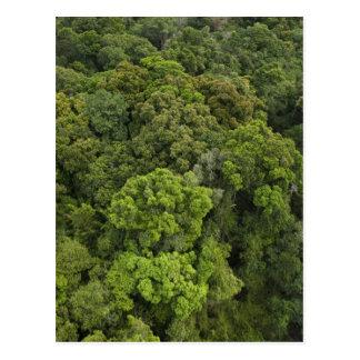 Aerial View of rainforest. Iwokrama Reserve, Postcard