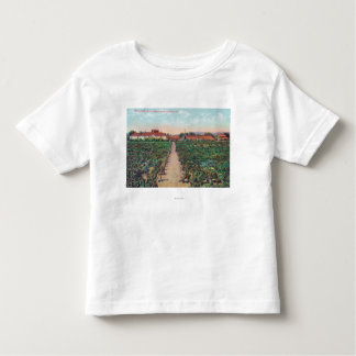 Aerial View of the Vineyards and Wine Cellars Toddler T-shirt