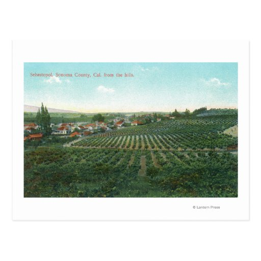 Aerial View of Town, Sonoma County from the Hill Postcards