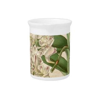 Aerides odorata (or odoratum) pitcher