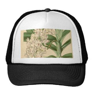 Aerides odorata (or odoratum) trucker hat